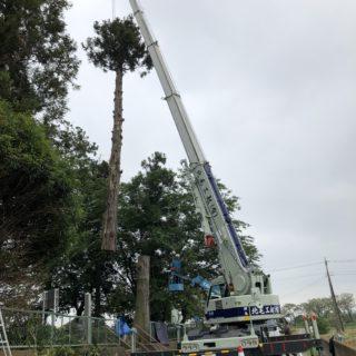 高木の伐採工事