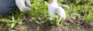 草むしり・雑草対策
